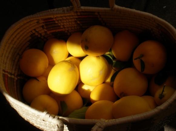 Lemon LIght