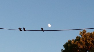 Birds Before the Moon