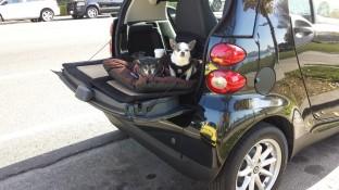 Chihuahua's tailgating at Lake Merritt, Oakland