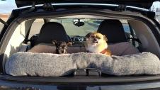 Kuji & Kojo cruising